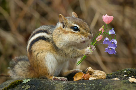 Chipmunk with flowers