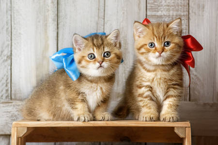 Kittens with satin bows