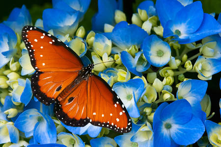 Motyl na niebieskich kwiatach