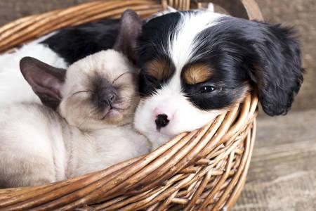 Štěně a kotě v košíku