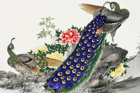 "Numata Kashū: ""Peacock and Pivoňka"""
