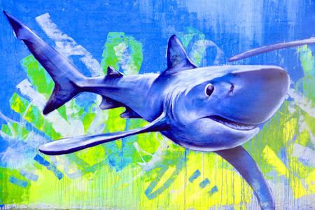 Graffiti de requin