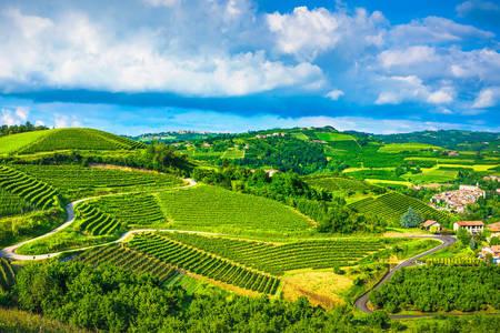 Vineyards of the Langhe region