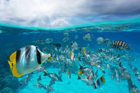 Морски живот