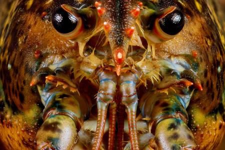 Макросъемка омара
