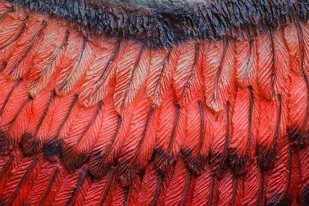 Prehistorische vogelvleugel