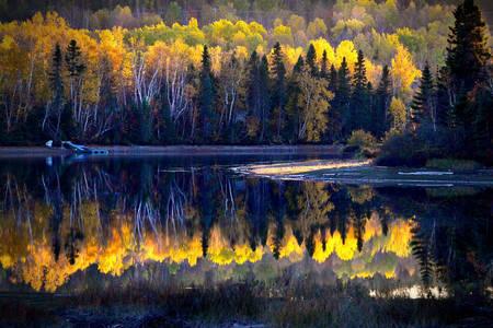 Paisagem da floresta canadense de outono