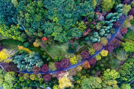 Top view of trees of different colors