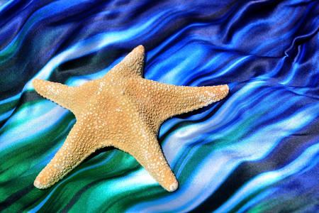 Étoile de mer sur fond azur