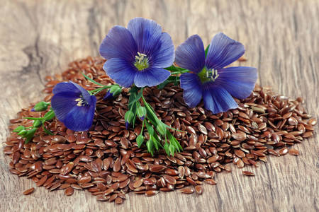 Flax flowers and seeds