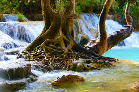 Árbol en cascada