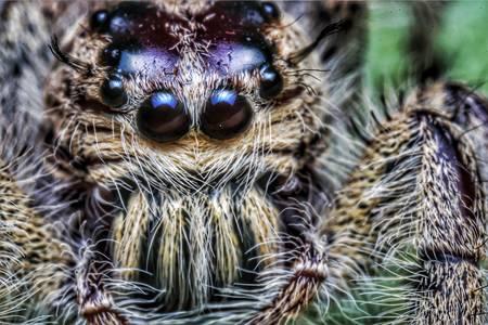 Örümcek makro