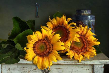 Sunflowers on the table