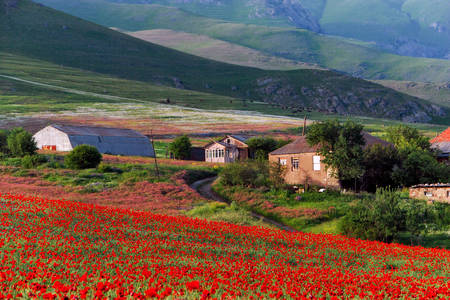 Poppy field in a mountain village