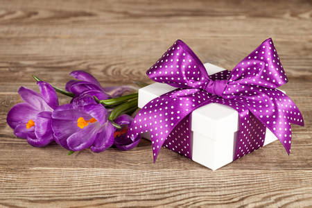 Gift and crocuses