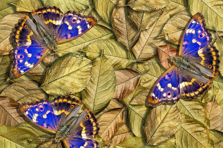 Butterflies on the leaves
