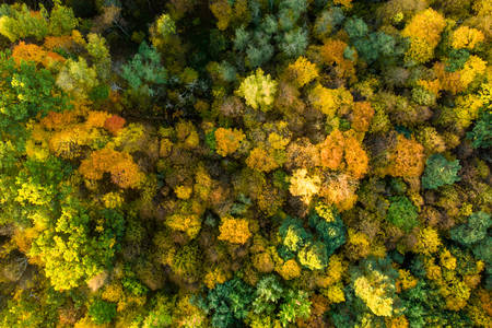 Autumn forest from above