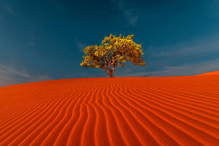 Sand dunes and a lonely tree