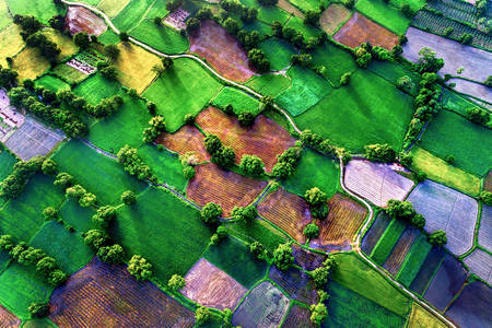 Top view of rice fields