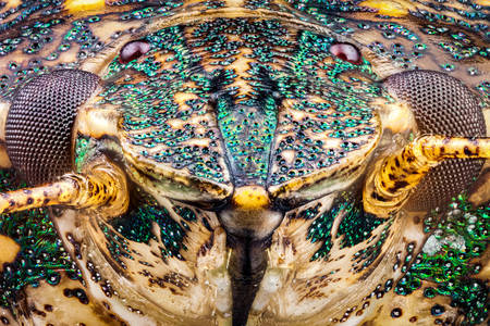 Hlava mramorového brouka