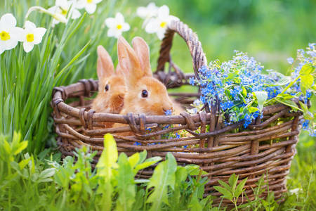 Rabbits in a basket with flowers