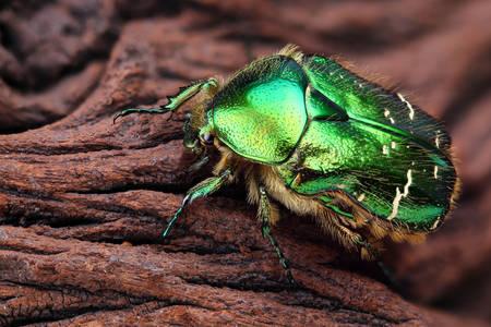 Макро снимка на зелен бронз