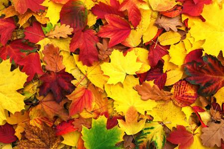 Опаднали есенни листа