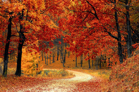 Jesenja priroda