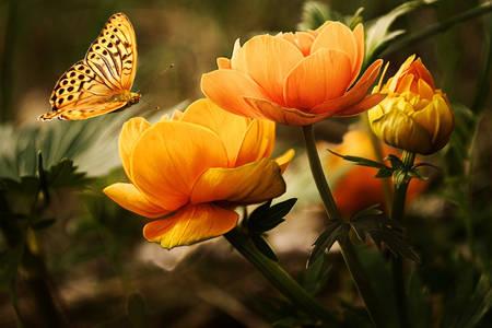 Leptir i cvetovi
