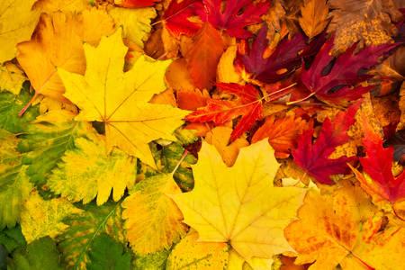 Jesenje lišće