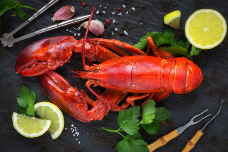 Lobster with lemon slices and herbs