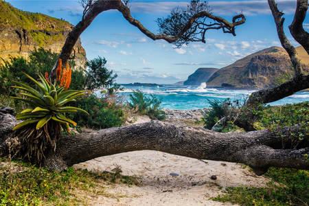 Natuur aan de kust in Zuid-Afrika