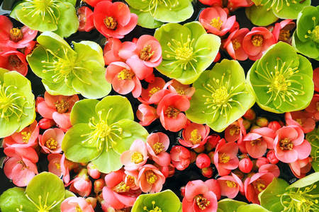 Pink and green flowers