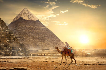 Nomad on a camel near the pyramids