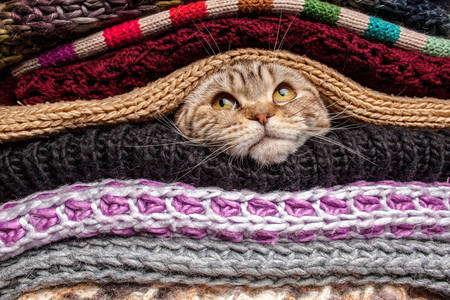 The cat is hiding among knitted clothes