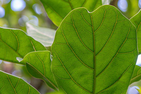 Macro photo of green leaves