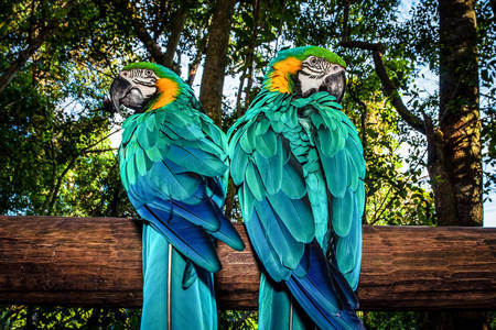 Parrots on the tree