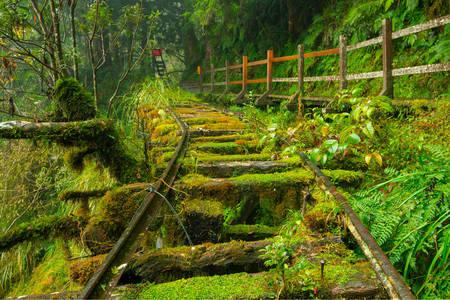 Jianqing Old Railway