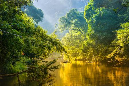 Річка в тропічному лісі
