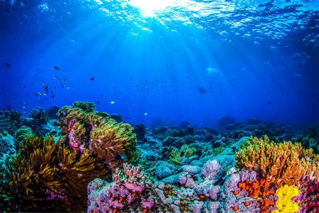 Mercan kayalığı