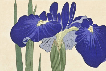 "Ohara Koson: ""Blue Irises"""