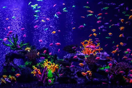Peixe néon