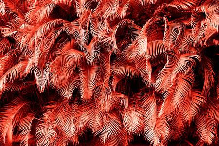 Foglie tropicali rosse
