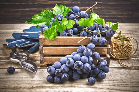 Ripe grapes in a box