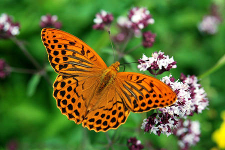 Pillangó egy virág