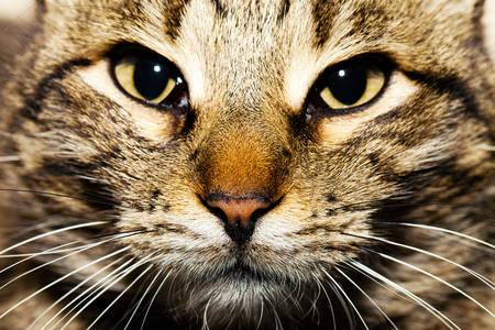 Kočka zblízka