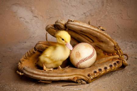 Caneton dans un gant de baseball