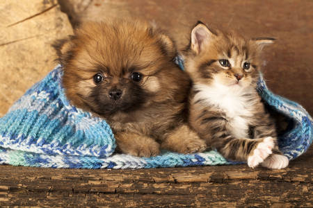 Puppy and kitten in a scarf