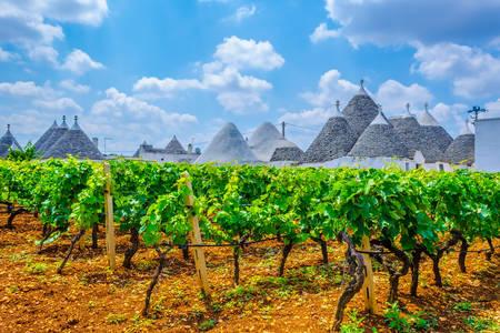 Vineyards in Alberobello