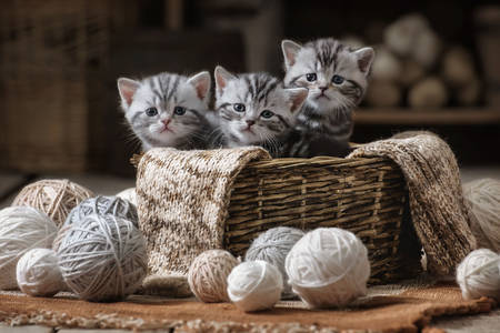 Gray kittens in a basket